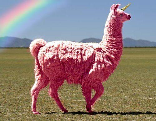 peruvian magic lama Les Recherches les plus bizarres  sur Artdeseduire !